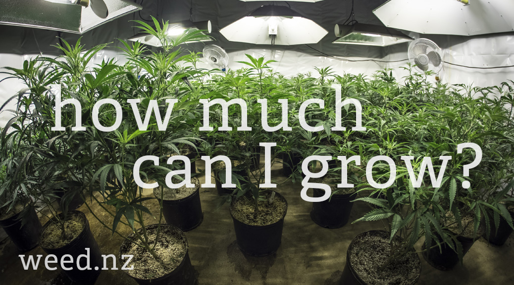 How much weed can I legally grow in NZ?
